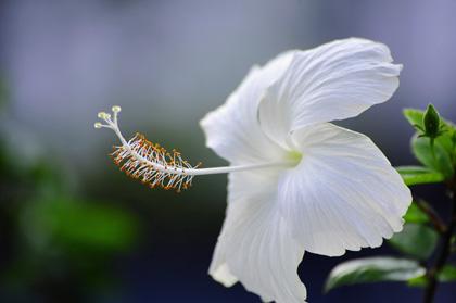 fleurs en côte d'ivoire